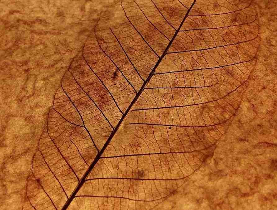 Cómo hacer esqueletos de hojas